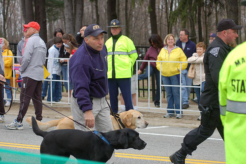 bomb sniffing dogs