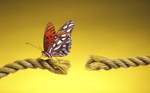 butterfly-on-cut-rope-cord-cutting-image-300x187