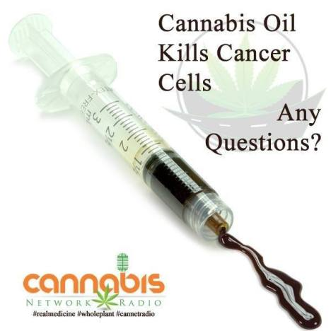 cannabis kills cancer