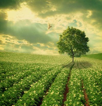 In iedere cel en in ieder orgaan vindt er dan een bevruchting plaats die doorwerkt naar de omgeving en van de omgeving terug naar de mens. Iedereen en alles profiteert ervan.