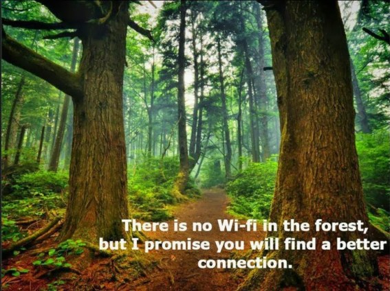 forest-bathing-health-benefits no wi-fi better connection
