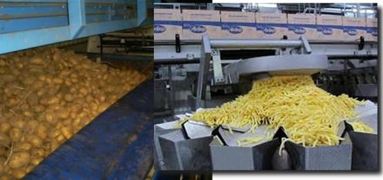 Van 'perfecte' aardapelen naar 'perfecte' friet.. Maar de verborgen narigheid is helaas nauwelijks zichtbaar..!