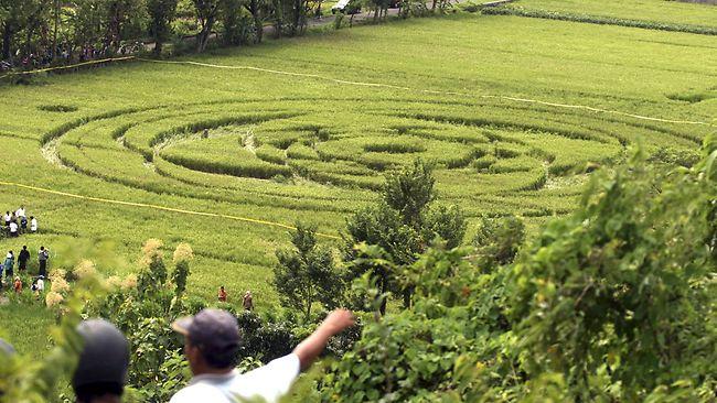 indonesia rijstcirkel