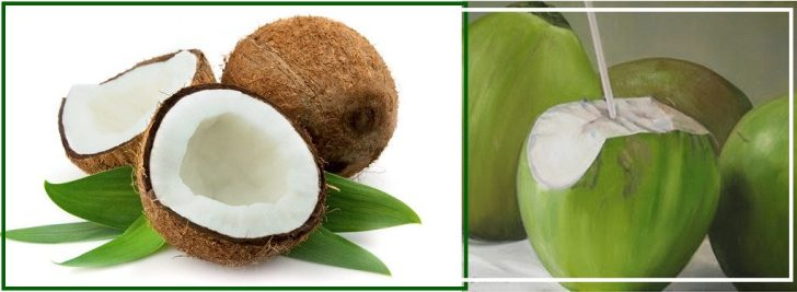 kokosnoot groen en bruin