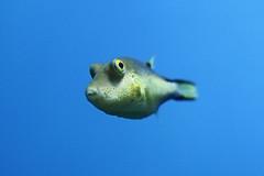 Een aquarium met één vis...