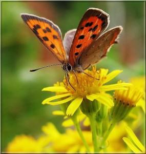 Transformatie wordt symbolisch vaak getoond in de vorm van een vlinder. Van eitje naar rups en van rups naar een vliegende vlinder.