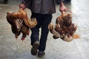 In 2003 brak in Nederland vogelgriep uit
