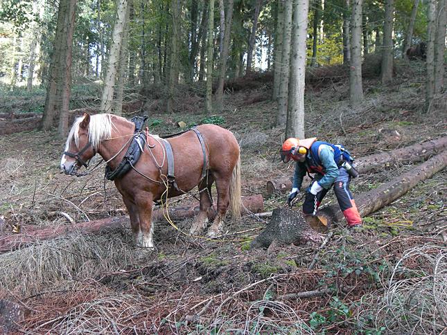wohlleben-paarden-bos