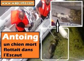 Antoing : macabre découverte - un chien mort flottait dans l'Escaut