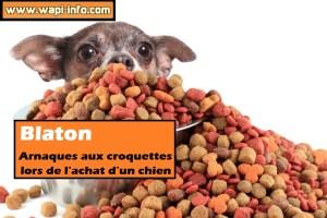 Blaton : arnaques aux croquettes lors de l'achat d'un chien