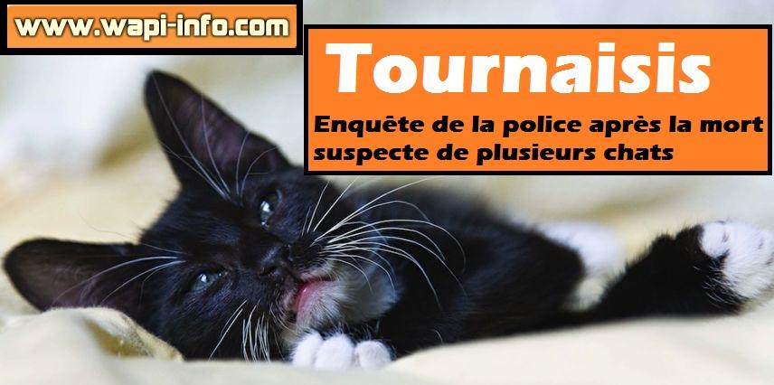 tournaisis mort suspecte chat