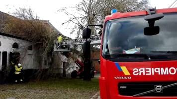 Aubechies : un arbre sur une maison