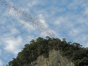 Bats, Gunung Mulu National Park, Malaysia