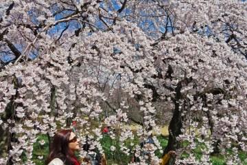 3 weken op rondreis door Japan langs alle hoogtepunten
