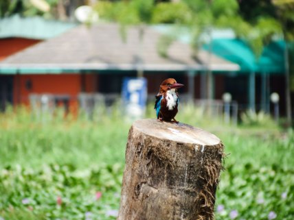 Kingfisher backwaters, Kumarakom, Kerala, India