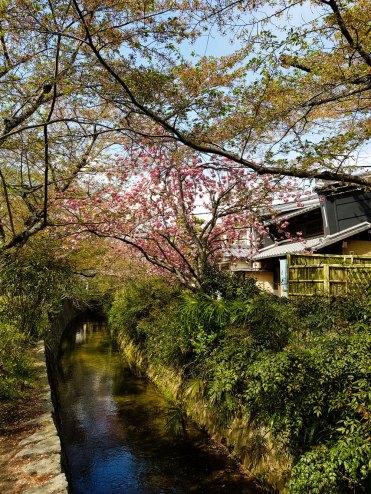 Philosopher's Path Kyoto, Japan