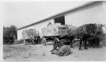 wards-history-horses