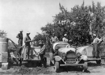 wards-history-orchard