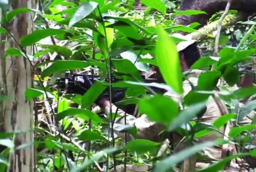 British Army 4 RIFLES Jungle Warfare Training, Exercise Mayan Storm, Belize, video still 77th Brigade (Crown Copyright, 2018)