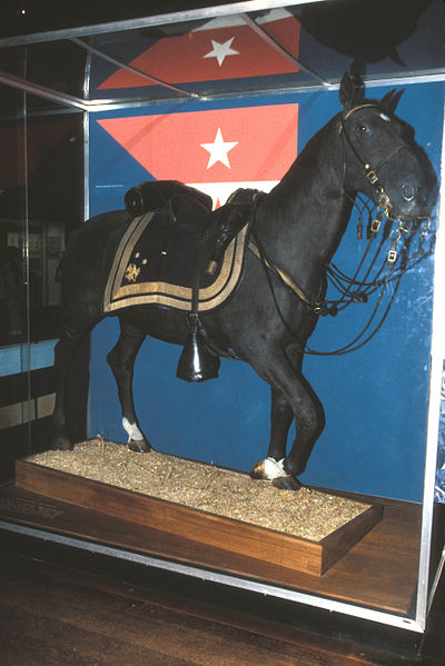 General Sheridan's Morgan horse, Winchester. Jerrye & Roy Klotz, MD/ Own Work/Wikipedia/CC BY-SA 3.0