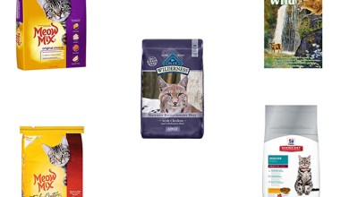 Cheap Dry Cat Food Review