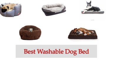 Best Washable Dog Bed Review