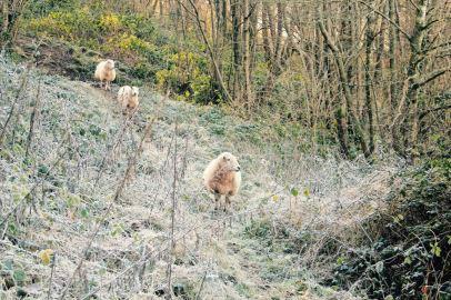 Winters fleece