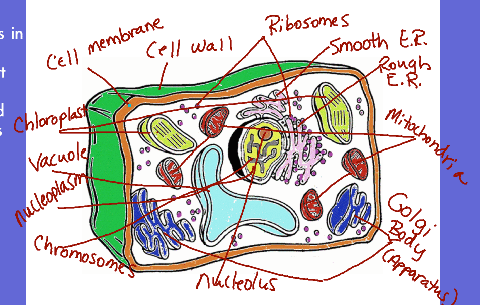 biology corner worksheets worksheet