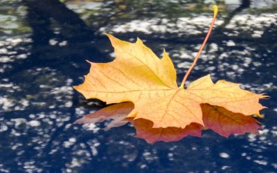 Wissenswertes – Herbst