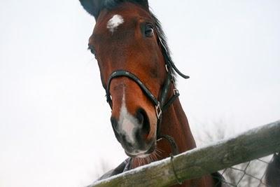 12 von 12 im Januar 2010 | Mein Tag in Bildern, waseigenes.com