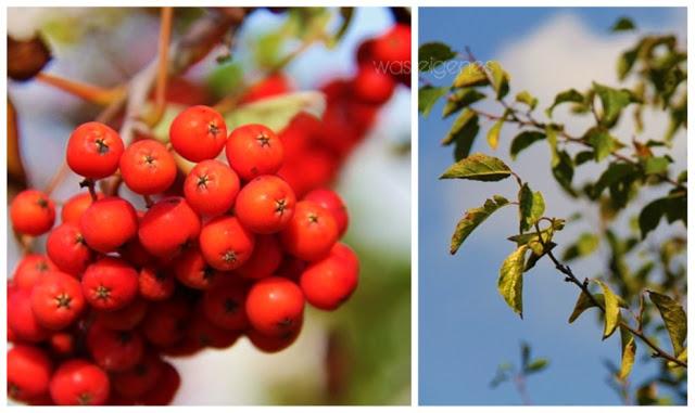 Herbstboten_1