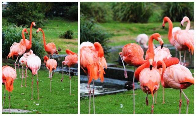 kölner_zoo36