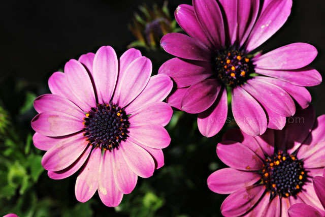 Makro Fotografie | Blumen | waseigenes.com