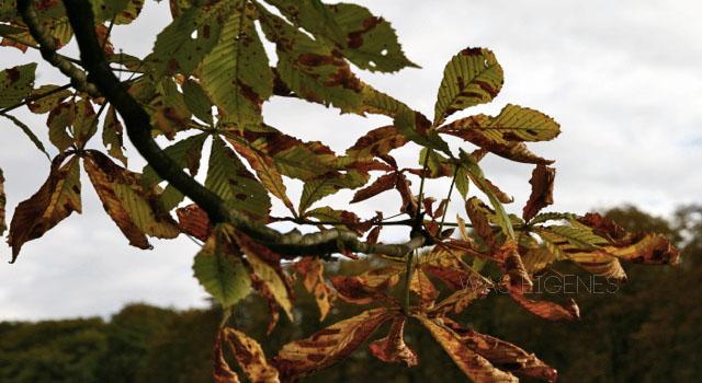 Herbst 2012 | waseigenes.com