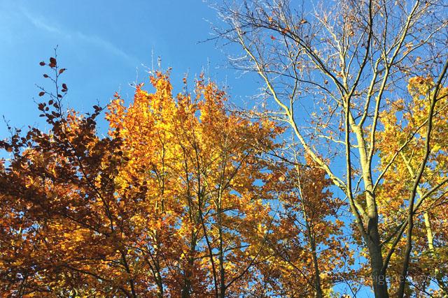 Herbst 2015   Herbstliebe   waseigenes.com
