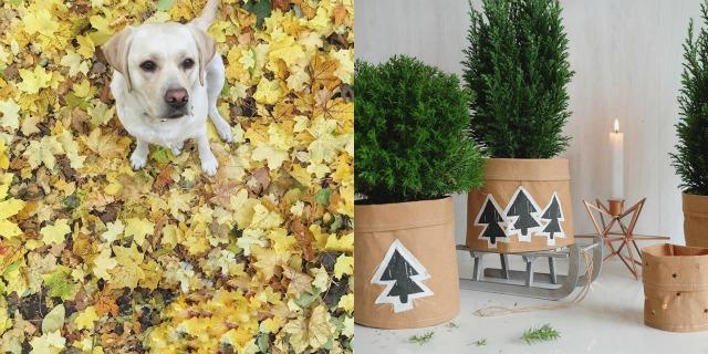 monatsrueckblick-oktober-2015-instagram-was-eigenes-blog-9