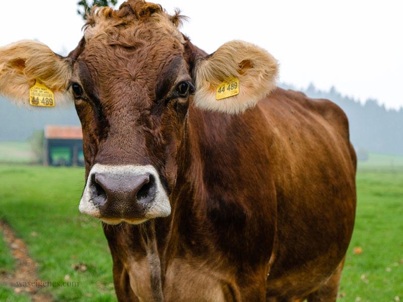 Weidekuh, Bio-Bauernhof Jackelhof Bayern   REWE Bio   weil Bio nicht gleich Bio ist   waseigenes.com