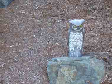 electric-connection-near-owl-on-west-side-of-driveway