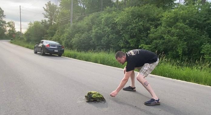 Ron turtle