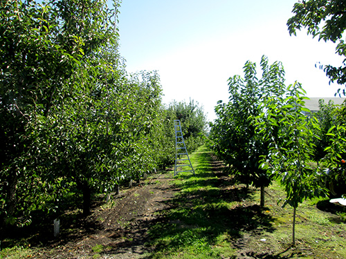 Johnson Orchards in Yakima, Washington