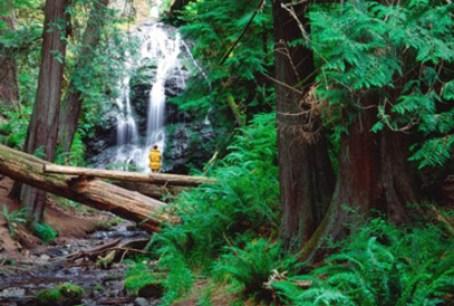 Hiking_at_Waterfall-Moran_St_Park