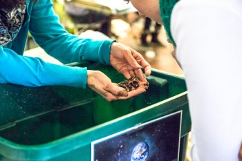 showcasing the benefits of composting