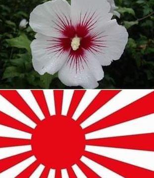 【悲報】韓国大荒れ ムクゲが旭日旗を象徴する日本の花だったと判明