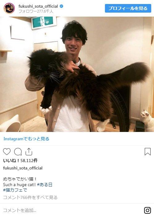 【画像】デカすぎる猫を抱っこする福士蒼汰wwwwwwwwww