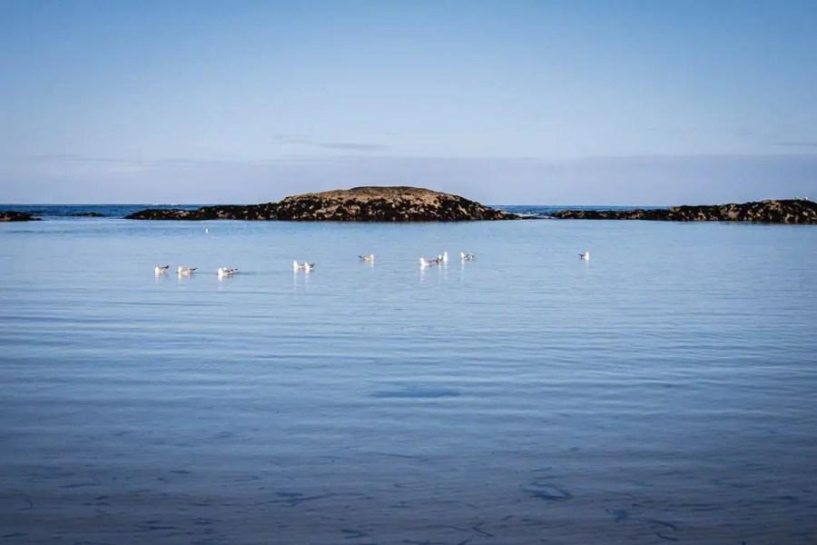 Seabirds on Coll
