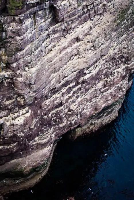 Guillemots and razorbills nesting on the Great Stack on Handa Island.