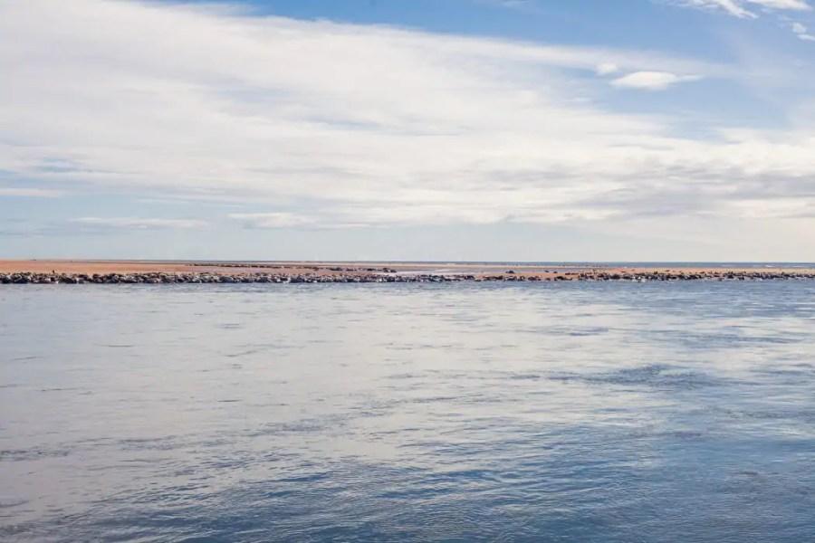 A local seal colony on Newburgh beach.
