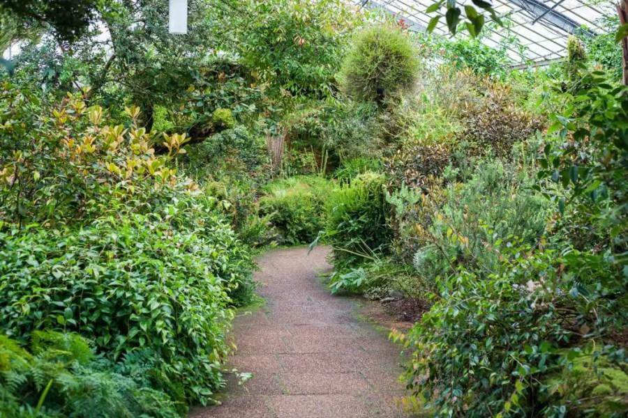 Greenery at the Royal Botanic Garden in Edinburgh.