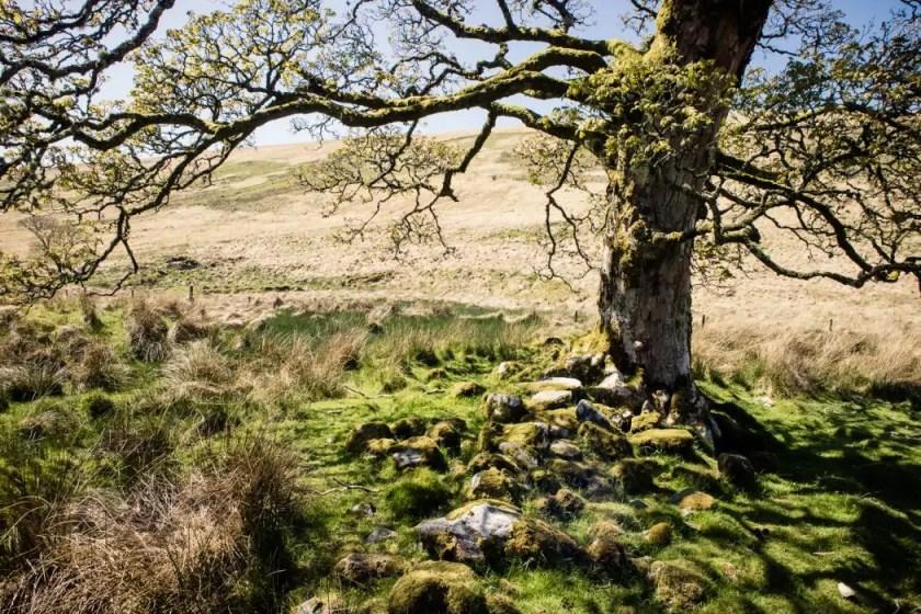 A distinct solo tree along the West Island Way.