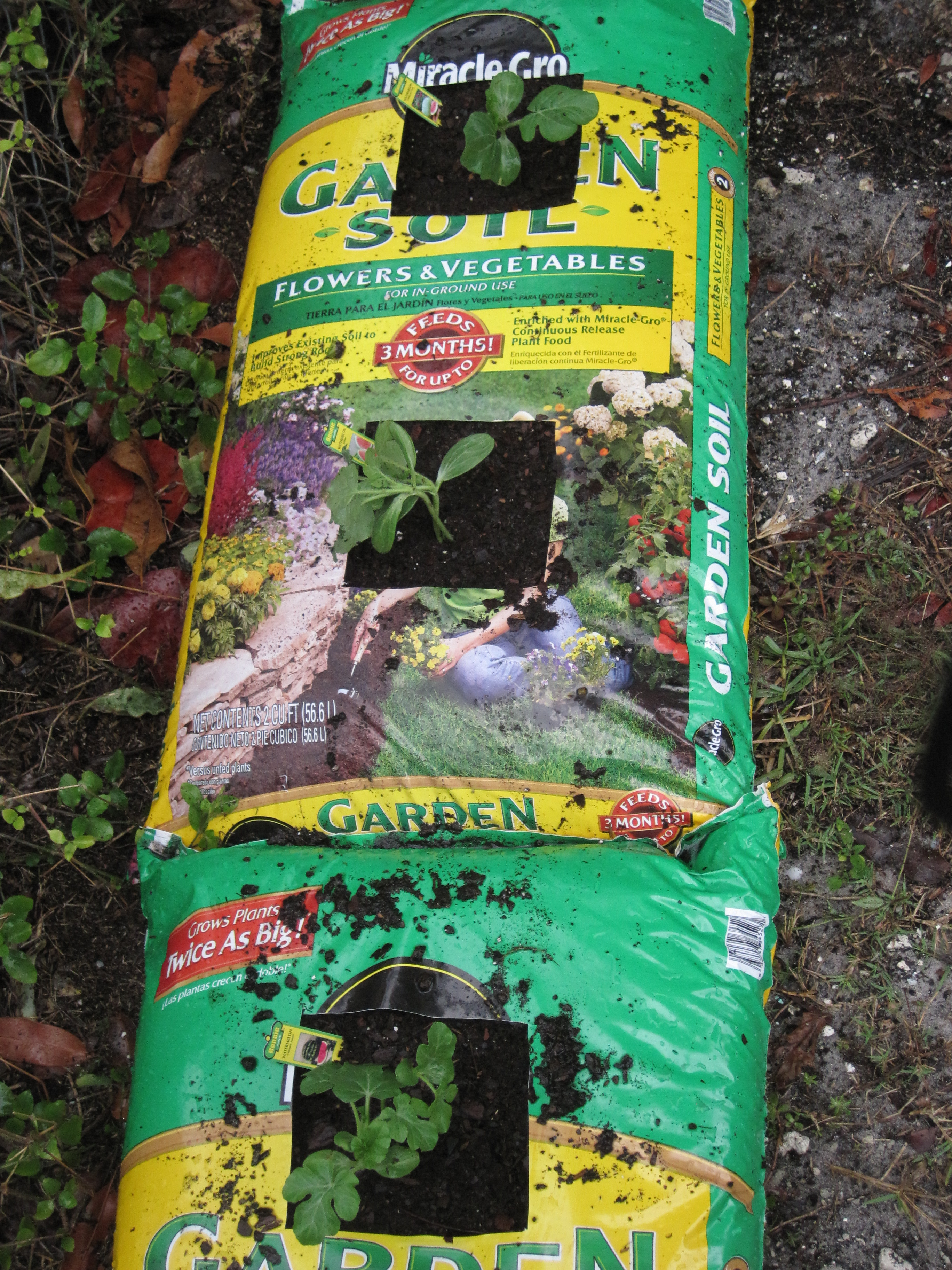 What Put Soil Vegetable Garden